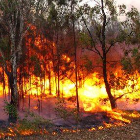 Australian bushfire