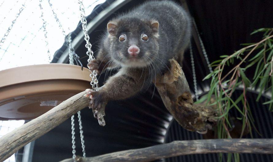 FAWNA Possum Finishing School